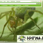 Http www nigma ru index php