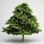 3Ds max модели деревьев