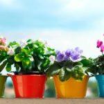 Лучшие удобрения для домашних растений