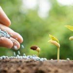 Качественные удобрения — хороший урожай